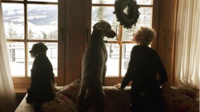 Małgorzata Kożuchowska i jej psy- Mila i Grey